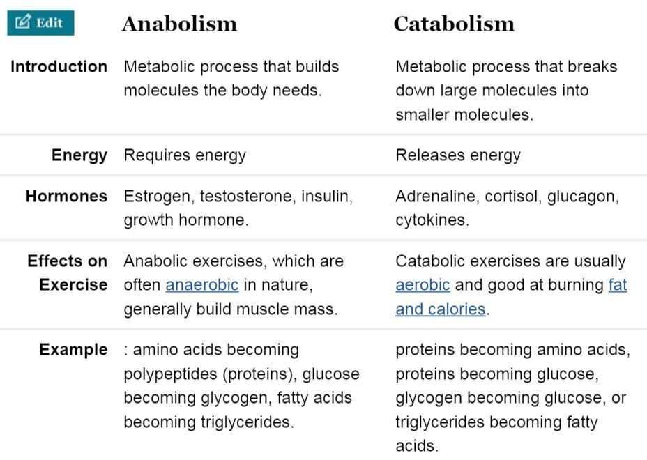 Anabolic And Catabolic Process Hormones And Exercise Brain